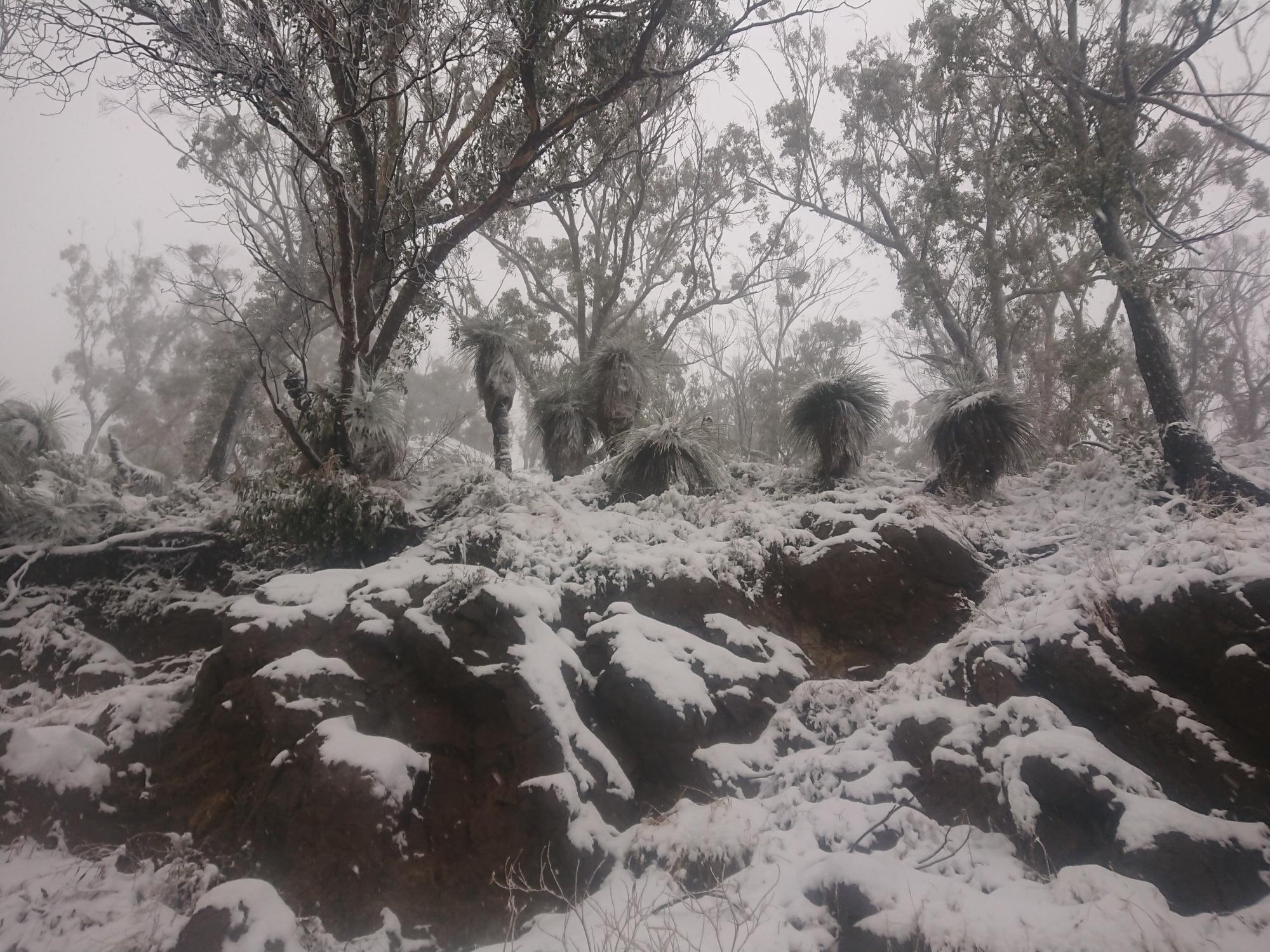 Snow at Mt Kaputar   PHOTOS
