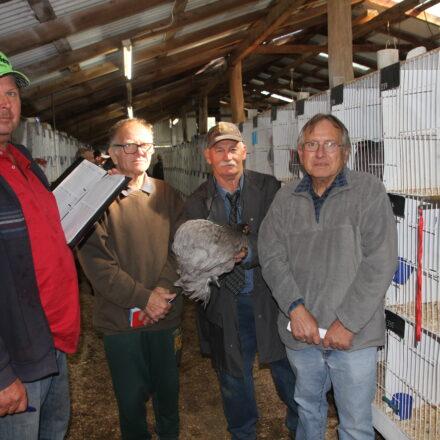 Record entries for Narrabri Poultry Show   PHOTOS